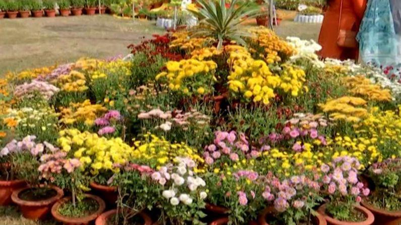 या प्रदर्शनाचं वैशिष्ट्यं  म्हणजे यात 100 पेक्षा जास्त शेवंती फुलाच्या जाती पाहायला मिळत आहे.