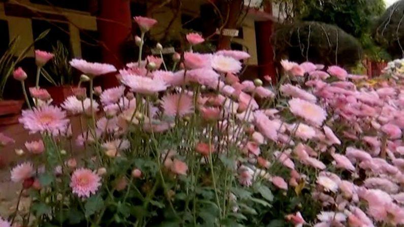 कोरोना काळात घरात राहून कंटाळलेल्या फुलप्रेमींसाठी नागपूरच्या हिसलोप कॉलेजमध्ये फुलांचे प्रदर्शन भरवण्यात आले आहे.