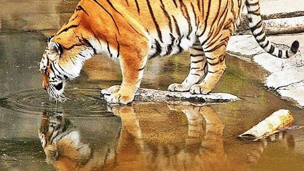 bor wildlife sanctuary information