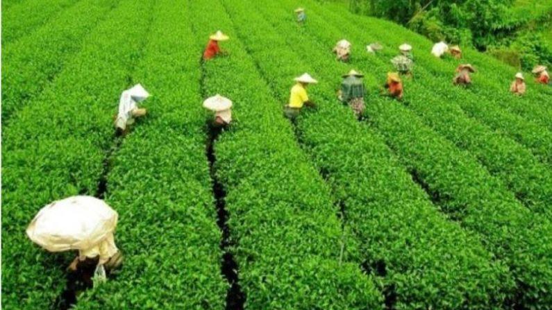 आसाम हे कृषी प्रधान राज्य आहे. या राज्याच्या अर्थव्यवस्थेत शेतीला महत्त्वपूर्ण स्थान आहे.