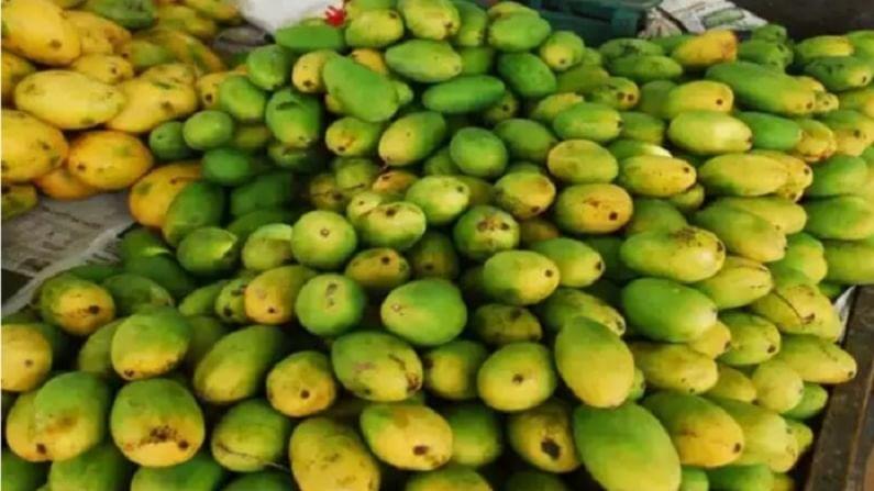 दशहरी आंब्याचा रंग जास्त हिरवा आणि फिकट पिवळा असतो. हे खूप चवदार आणि लज्जतदार असतात. बाकीच्या आंब्यापेक्षा या आंब्यांची लांबी जास्त आहे.