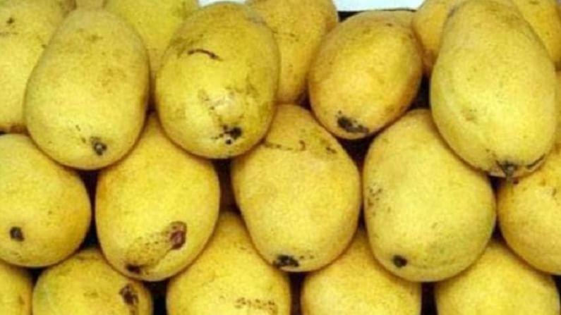यूपीचा चौसा अतिशय प्रसिध्द आहे. यूपीमध्ये या आंब्यांचा बाग आहेत. हा आंबा गोल्डन रंगाचा आहे. या आंब्याची इरतही देशांमध्ये निर्यात केली जाते.