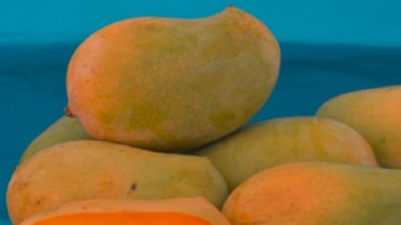 केसर आंबा सुगंधासाठी प्रसिद्ध आहे आणि चविलाही अतिशय गोड आहे.