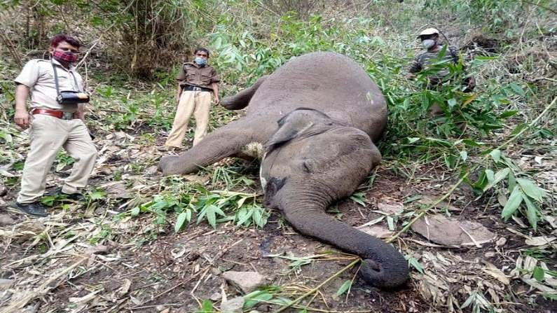 elephants found dead