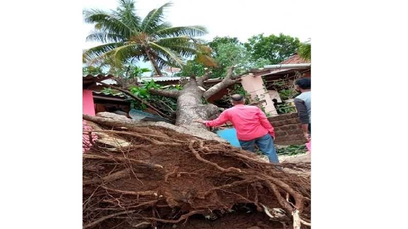 वेगाने वारे वाहू लागल्याने देवरुखमधील हरपुडे येथे झाड उन्मळून पडले.भलमोठं झाल हे बुधाजी घुग आणि पांडूरंग घुग यांच्या घरावर हे झाड पडलं.यामध्ये जिवीतहानी झाली नसली तरी घराचं मोठं नुकसान झालय.ग्रामस्थांकडून हे झाड कटींग करुन बाजूला करण्याचं काम सुरु आहे.