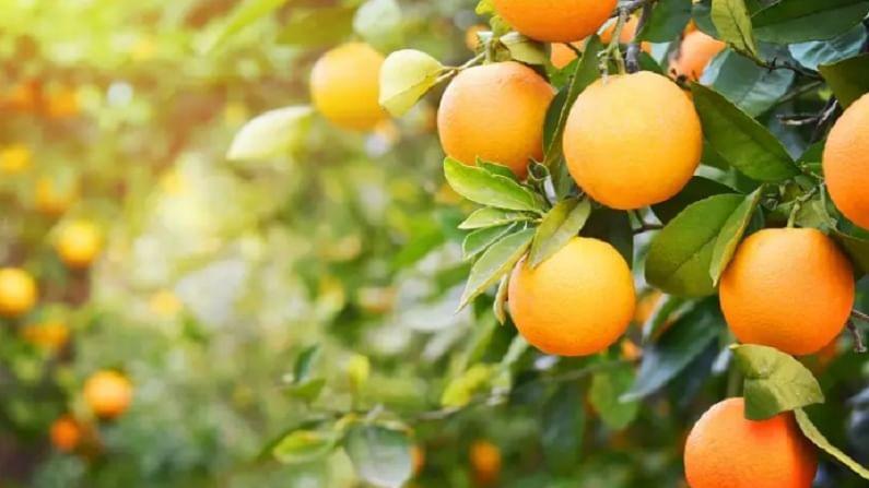 संत्रीचा रस आपल्या त्वचेसाठी फायदेशीर असतो. नियमितपणे संत्रीचा रस चेहऱ्याला लावल्याने चेहऱ्यावर नैसर्गिक चमक येते.