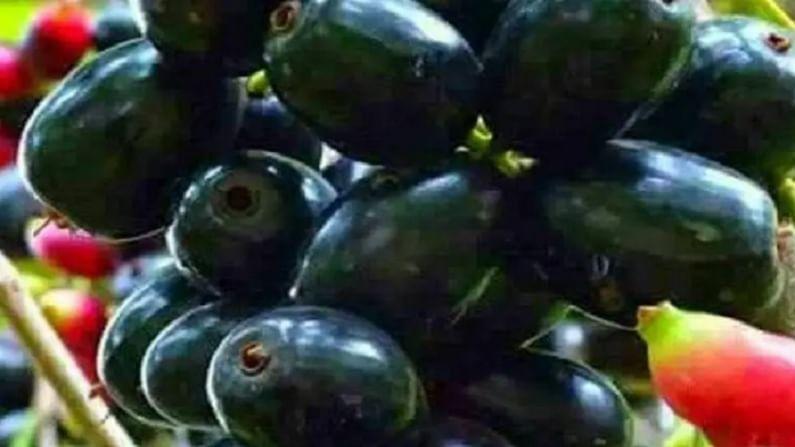 पावसाळ्याच्या हंगामात बाजारात आपल्याला चांगली आणि ताजी फळे मिळतात. या फळांमध्ये अँटिऑक्सिडेंट गुणधर्म असतात. पावसाळ्यात आपल्या आहारात व्हिटॅमिन सी समृद्ध असलेल्या काही फळांचा समावेश करू शकता. जसे लीची, नाशपाती, बेरी जांभूळ ही फळे आहारात घेतल्याने आपली त्वचा देखील चांगली राहते.