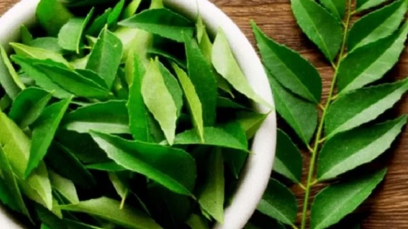 curry leaves 1