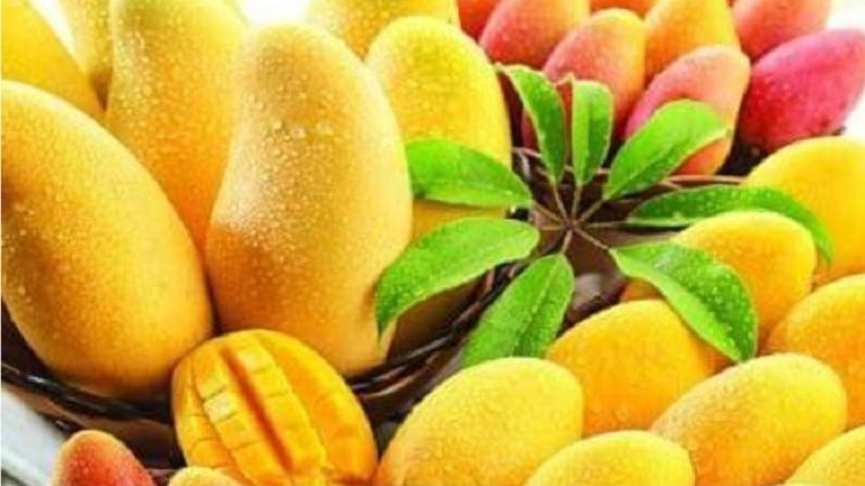 पोटाशी संबंधित समस्यांसाठी आंब्याची पाने खाऊ शकतात. यासाठी तुम्ही आंब्याची पाने गरम पाण्यात रात्रभर घाला आणि झाकून ठेवा. सकाळी हे पाणी गाळून रिकाम्या पोटी प्या.