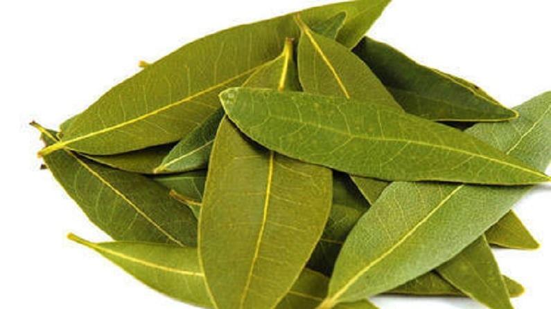 Bay leaf 4