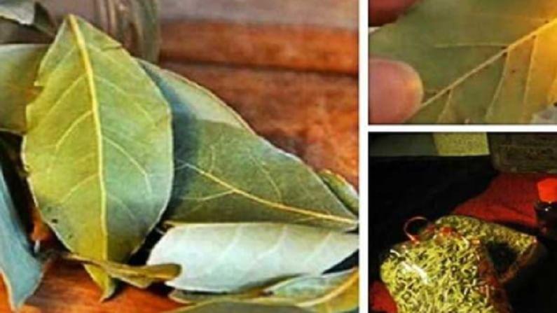 Bay leaf 3
