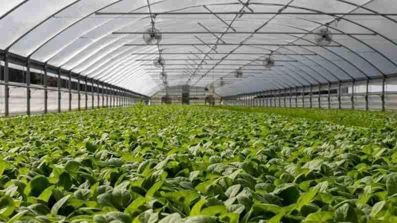 PHOTO | Career In Agriculture : कृषी क्षेत्रात करिअर बनवू इच्छिता? तर हा आहे सर्वात चांगला पर्याय, मिळेल चांगला पगार
