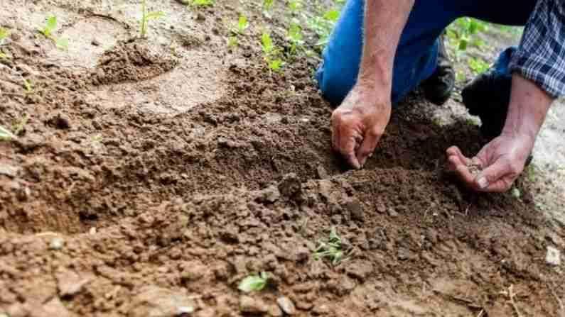 माती आणि वनस्पती वैज्ञानिक - यांचे कार्य जमिनीच्या रचनेचा झाडाच्या वाढीवर कसा परिणाम होईल हे पाहणे हे आहे. ते सविस्तर अहवालात डेटा सादर करतात, ज्याद्वारे शेतकऱ्यांना आपल्या जागेचा अधिकाधिक उपयोग कसा करता येईल याबद्दल सल्ला दिला जातो. तसेच सर्वात योग्य पिकांची माहिती दिली जाते. मृदा व वनस्पती वैज्ञानिक प्रयोगशाळांमध्ये संशोधन कार्य करतात. यासह ते शेतातून नमुनेही गोळा करतात.