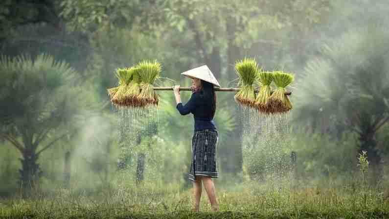 व्हिएतनाम - पारंपारिक पाककृती, संस्कृती आणि नद्यांचा देश असलेला व्हिएतनाम (Vietnam Currency) सौंदर्यामध्ये कमी नाही. आपल्याला पूर्णपणे भिन्न संस्कृतीचा आनंद घ्यायचा असेल तर व्हिएतनाम ही आपल्याला आवडेल अशी जागा आहे. यासह, येथे एक विशेष गोष्ट देखील आहे की व्हिएतनामला भेट देणे अजिबात महाग नाही. युद्ध संग्रहालय आणि फ्रेंच वसाहती वास्तूकला ही येथे आकर्षणाची मुख्य केंद्रे आहेत. 1 भारतीय रुपया - 308.22 व्हिएतनामी दोंग