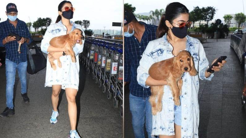दाक्षिणात्य सुंदर अभिनेत्री रश्मिका मंदाना (Rashmika Mandanna) नुकतीच मुंबई विमानतळावर स्पॉट झाली होती. यावेळी अभिनेत्री तिच्या पाळीव कुत्र्यासोबत दिसली होती. अभिनेत्रीने तिच्या कुत्र्याला उचलून धरले होते. मुंबई विमानतळावरील अभिनेत्रीची सुंदर छायाचित्रे पाहा.