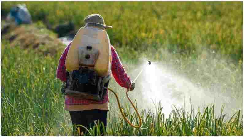 पेस्टिसाइड्स (किटकनाशके) : आपल्या देशात पिकांचं उत्पादन वाढावं आणि त्यावरील किटकांचा नायनाट व्हावा म्हणून अनेक किटकनाशकं वापरली जातात. मात्र, परदेशात जवळपास यातील 60 विषारी किटकनाशके विक्रीस बंदी आहे. ही किटकनाशकं फळ किंवा धान्यातून मानवी शरीरात जातात आणि अनेक आजारांचं कारण ठरतात.