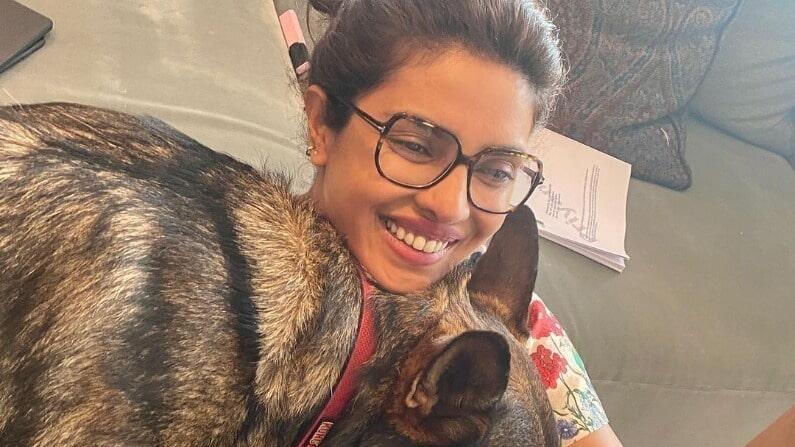 प्रियांकाची ही मजेदार आणि प्रेमळ शैली चाहत्यांच्या पसंतीस उतरत आहे. प्रियंकाचे फोटो 10 लाखाहून अधिक लोकांना आवडले आहे.
