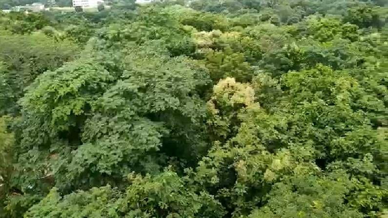 १०० एकरात या राजभवनलचा विस्तार असून, राजभवनच्या अवतीभोवती तब्बल  १ लाख झाडं आहे. त्यामुळे एखाद्या जंगलाप्रमाणे नागपूरचं राजभवन दिसतेय. शिवाय या परिसरात असलेले सुंदर लॉन, पावसाळ्यात एखादा हिरवा गालीचा जमिनीवर अंथरल्यासारखे दिसतात.