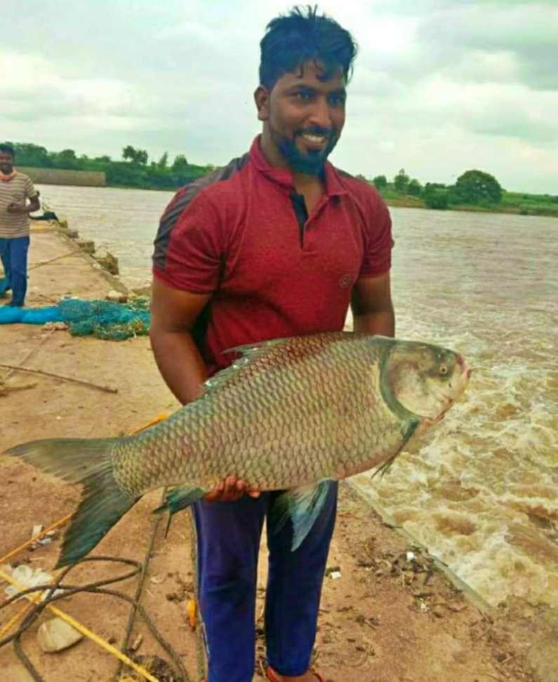 या माशाचे फोटो सध्या सोशल मीडियावर चांगलेच व्हायरल झालेत. त्यानंतर हा मासा पाहण्यासाठी अनेकांनी नदीकडे धाव घेतली. भिमा नदीच्या पात्रात अनेक वर्षांनंतर सर्वात जास्त किलो वजनाचा मोठा मासा सापडला आहे.