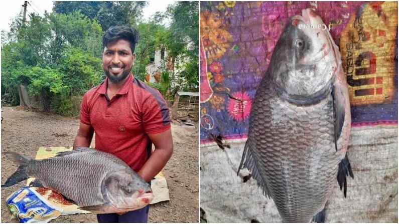 सध्या भिमा नदीच्या पात्रात मोठ्या प्रमाणावर चिलापी जातीचेच मासे सापडतात. कटला, रहु, वाम्ब, मरळ या जातीच्या माशांची संख्या कमी झाली आहे. त्यामुळे या माशांना सध्या भाव अधिक आहे.