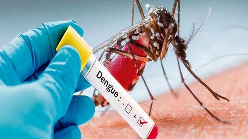 भारत हा एक सुंदर देश आहे, जिथे हिवाळा, उन्हाळा आणि पाऊस असे सर्व प्रकारचे हवामान दिसते. पहिले दोन ऋतू सामान्य असतात . पण पावसाळ्याच्या हंगामात आपण अनेक लोकांना व्हायरलमुळे आजारी पडतानाही पाहतो. या काळात होणारे सर्वात मोठे आजार म्हणजे डेंग्यू आणि मलेरिया आहे, जे भारतातील लाखो लोकांना प्रभावित करतात. हा आजार एडीस इजिप्ती नावाच्या डासाने पसरतो. हा डास घरगुती वातावरणात आणि आजूबाजूला जमा झालेल्या स्वच्छ पाण्यातूनच पसरतो. पावसाळ्यात विषाणूजन्य विषाणूजन्य आजारांचा धोका असतो, त्यामुळे ते टाळण्यासाठी आपण काही महत्त्वाच्या गोष्टींकडे लक्ष दिले पाहिजे.