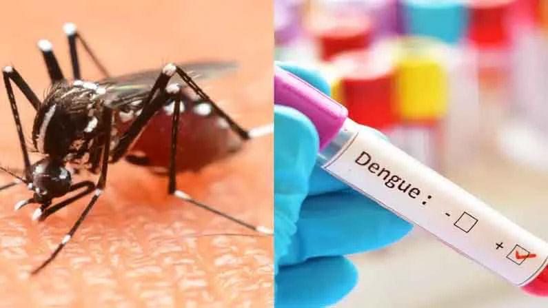 आरोग्य विमा योजना देखील आवश्यक : वेक्टर जनित विषाणूजन्य रोग जसे डेंग्यू, मलेरिया आणि चिकनगुनिया दरवर्षी पावसाळ्यात पसरतात. त्यांचा प्रभाव गावांमध्ये तसेच लहान-मोठ्या शहरांमध्ये दिसून येतो. हा रोग मोठा आहे, म्हणून आपल्याला अधिक सतर्क आणि सावध राहण्याची गरज आहे. वर नमूद केलेल्या टिप्स तुम्हाला खूप मदत करतील. या व्यतिरिक्त, आजार झाल्यास आपण आपल्यासोबत एखादा आरोग्य विमा योजना ठेवणे आवश्यक आहे.