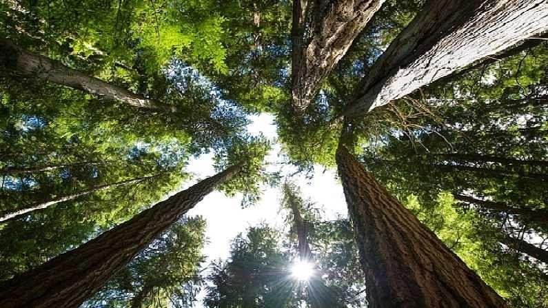सर्वात टिकावू लाकूड कोणतं याविषयी अनेक अहवाल आहेत. यातील काही अहवाल शिसम या लाकडाला मजबूत सांगतात. याचा उपयोग विशेष करुन फर्निचरसाठी होतो. गावांमध्ये जुन्या लोकांनी म्हणूनच मोठ्या प्रमाणात शिसमची झाडं लावू ठेवलीत. या लाकडाच्या टिकावूपणामुळेच शिसमची किंमतही खूप असते.