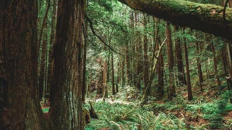 देवदारला हिमाचल प्रदेशात विशेष दर्जा देण्यात आलाय. हे झाड कोणत्याही प्रकारच्या मातीत सहजपणे येतं. त्यामुळेच ते लोकप्रिय आहे. हे झाड 45 मीटर किंवा त्यापेक्षा जास्त उंचीपर्यंत वाढतं. डोंगराळ भागात या झाडाचं भौगोलिक, सांस्कृतिक आणि भौतिक महत्व आहे.
