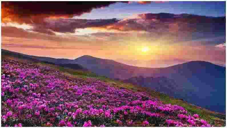 यमथांग व्हॅली : जर तुम्हाला व्यस्त जीवनापासून थोडा शांत वेळ घालवायचा असेल तर सिक्कीमची यमथांग व्हॅली तुमच्यासाठी योग्य जागा आहे. या खोऱ्यात तुम्हाला नेत्रदीपक फुलांचे देखावे, याक आणि गरम झरे यांचे मिश्रण पाहायला मिळतील. या दरीत 'शिंगबा रोडोडेन्ड्रॉन' अभयारण्य देखील आहे. या सुंदर फुलाच्या 24 पेक्षा जास्त जाती तुम्हाला इथे दिसतील.