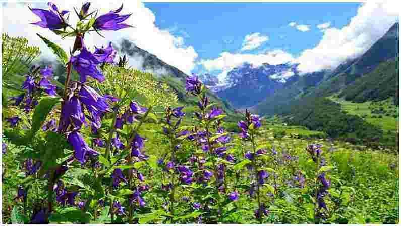 गोबिंदघाट : ट्रेकर्समध्ये खूप लोकप्रिय, फुलांची ही दरी नंदा देवी बायोस्फीअर रिझर्व्हचा भाग आहे. हे युनेस्को वर्ल्ड नेटवर्क ऑफ बायोस्फीअर रिझर्व्सपैकी एक आहे. जर तुम्ही या व्हॅली ऑफ फ्लॉवर्समध्ये पोहोचलात तर तुम्ही जवळच्या हेमकुंड साहिब गुरुद्वारा आणि नंदा देवी राष्ट्रीय उद्यानालाही भेट देऊ शकता.