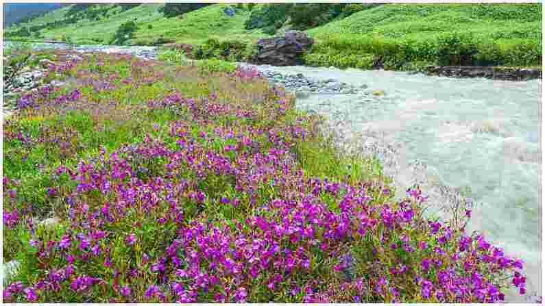 कास पठार : या पठारावर फुलांच्या 850 पेक्षा जास्त प्रजाती आढळतात. यामध्ये ऑर्किडची फुले, टूथब्रश ऑर्किड्स, इंडियन अॅरोरूट, दीपकाडी फ्लॉवर, ट्रॉपिकल ट्रंक, वाई-तुरा आणि इतर अनेक प्रजातींचा समावेश आहे. येथे कासा फुले मिळतात, जी येथे आढळणारी सर्वात सामान्य प्रजाती आहे.