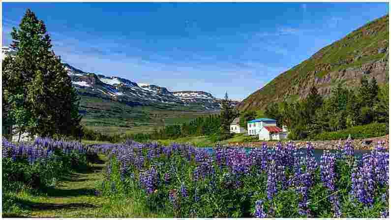 इडुक्की : ही दरी विशेषतः हनीमूनरचे नंदनवन म्हणून ओळखली जाते. जर तुम्ही ऑगस्ट महिन्यात येथे भेट देण्याची योजना आखत असाल, तर तुम्हाला नीलाकुरींजी नावाच्या भव्य लॅव्हेंडर रंगाच्या फुलांसह हिरवे हिरवे कुरणही दिसतील. ही फुले दर 12 वर्षांतून एकदाच फुलतात.