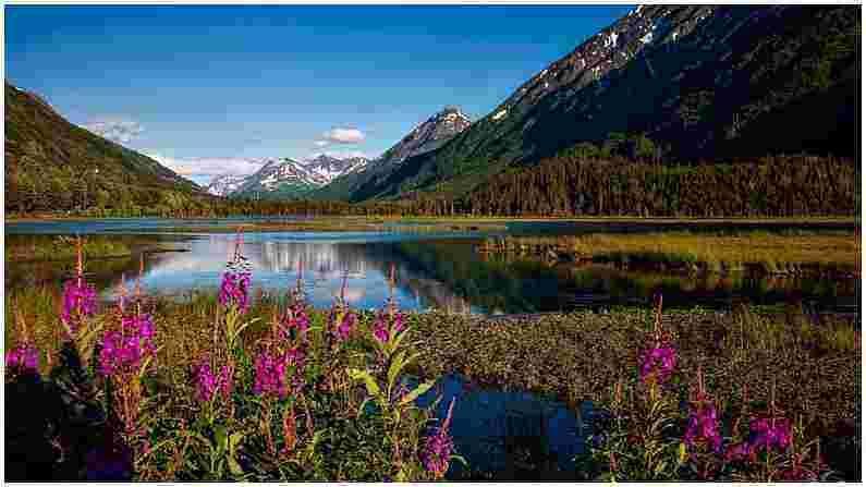 झुकोऊ व्हॅली : मनोरंजक गोष्ट म्हणजे या व्हॅलीमध्ये झुकोऊ लिली नावाची फुले फुलतात. विशेष गोष्ट म्हणजे फुलांची ही प्रजाती केवळ नागालँडमध्ये आढळते. ही दरी नागालँड-मणिपूर सीमेजवळ आहे. जर तुम्हाला शहराच्या गडबडीपासून दूर निसर्गाच्या सौंदर्याचा आनंद घ्यायचा असेल तर हे ठिकाण तुमच्यासाठी खरोखरच बनवले गेले आहे.