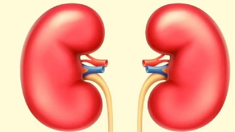 ज्या लोकांना किडनीची समस्या आहे. त्यांनी किवी फळ खाणे टाळावे. किवीमध्ये पोटॅशियम असते, ज्यामुळे किडनीच्या आजार वाढण्याची शक्यता असते. किडनीच्या रुग्णांना आहारात पोटॅशियमची कमीतकमी मात्रा वापरण्याचा सल्ला दिला जातो. या व्यतिरिक्त, किवीमध्ये व्हिटॅमिन सी आणि लिंबू आणि संत्र्यापेक्षा दुप्पट आम्ल सामग्री असते. या कारणास्तव किवी किडनीच्या रुग्णांसाठी चांगली मानली जात नाही.