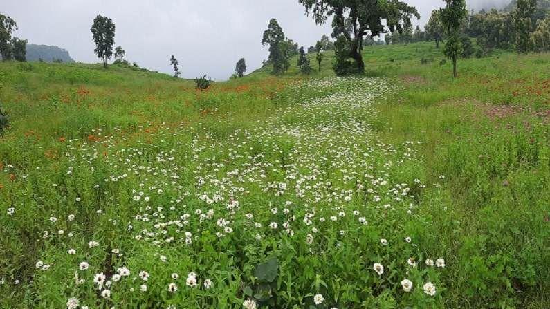 जिल्हा परिषदेचे तत्कालीन मुख्य कार्यकारी अधिकारी डॉ. मंगेश गोंदावले यांच्या कल्पनेतून हा प्रकल्प आकार घेत आहे. तीन महिन्यांपूर्वी उन्हाळ्यात गौताळ्यातील 12 हेक्टरवर विविध प्रकारच्या 40 वनस्पतींची बियाणे टाकण्यात आले होते. त्यात पांढरा, जांभळा, गुलाबी,लाल, पिलळा, नारंगी अशा सहा रंगांच्या झिनिया जातीच्या फुलझाडांचाही समावेश होता. आता या झाडांना चांगलाच बहार आला आहे. पुढील पाच वर्षात हा प्रकल्प पूर्णत्वास येईल, असे गोंदवले यांनी सांगितले.