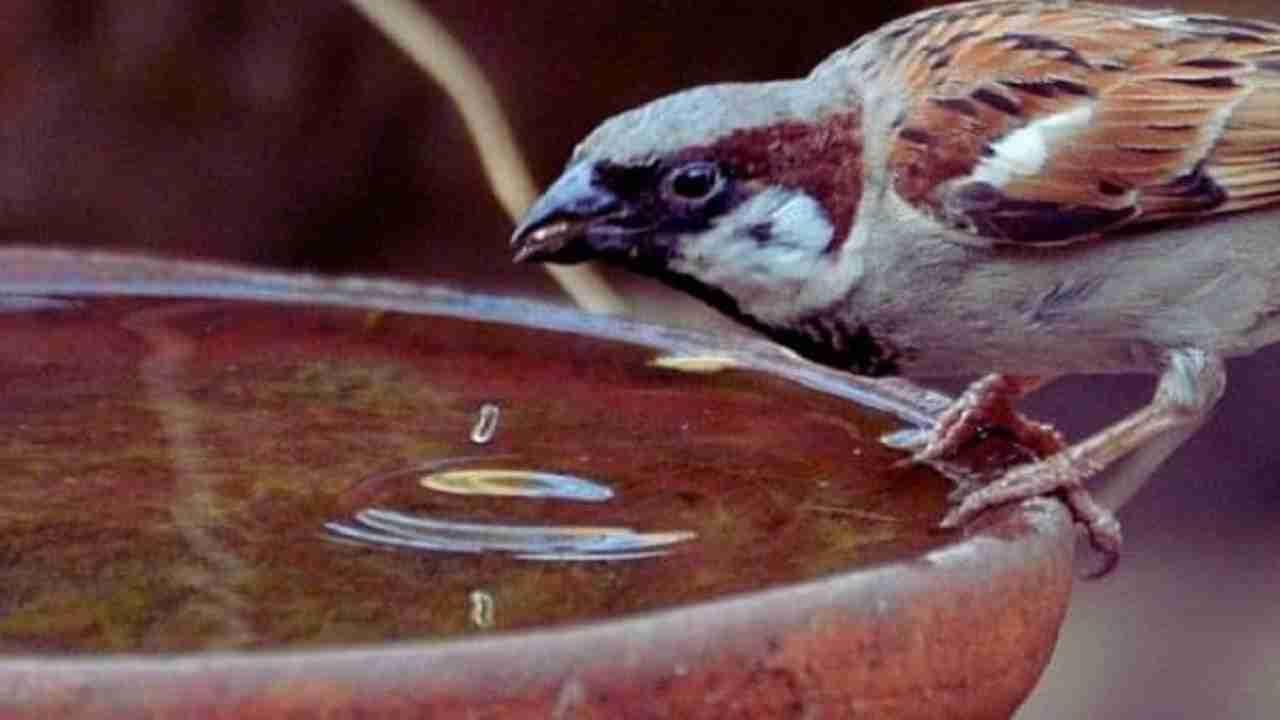 प्राणी आणि पक्ष्यांना दररोज पाणी पाजा. यामुळे देवता खूप प्रसन्न होतात आणि कुंडलीतील सर्व दोष दूर होतात. यामुळे जीवनातील त्रास दूर होतात आणि आरोग्य चांगले राहते. यासाठी प्राणी आणि पक्ष्यांसाठी स्वतंत्र भांडी बनवा. ही भांडी नियमानुसार पाण्याने भरलेली ठेवा. याशिवाय, शक्य असल्यास, त्यांना देखील खायला द्या.