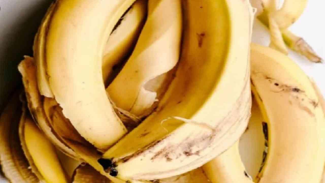 केळी केवळ आरोग्यासाठीच नव्हे तर त्वचेसाठी देखील खूप फायदेशीर आहेत. केळीच्या सालाच्या मदतीने आपण अनेक प्रकारचे फेसपॅक तयार करू शकता. केळीच्या सालीमध्ये पोषक आणि फायटोन्यूट्रिएंट्स असतात. हे त्वचेशी संबंधित समस्यांवर मात करण्यास मदत करू शकतात.
