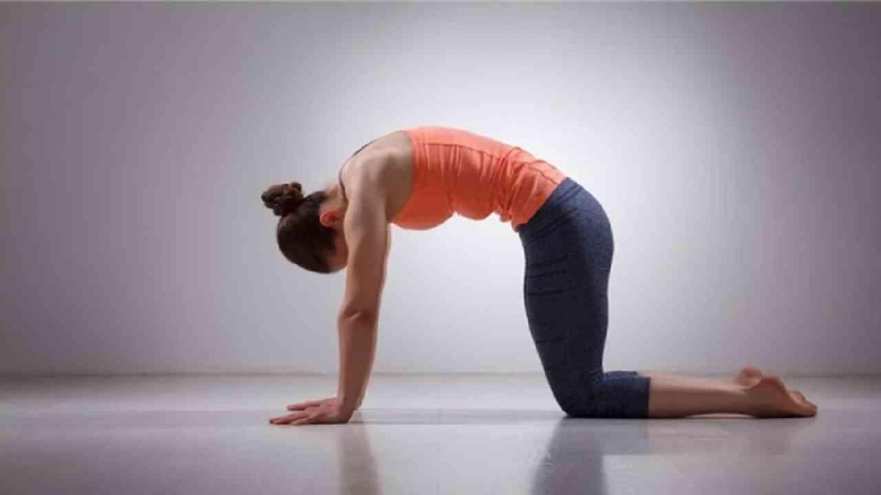 मार्जरीआसन - हे आसन आपल्या पाठीच्या कण्यासाठी फायदेशीर आहे. यामुळे रक्ताभिसरण चांगले होते. खांदे आणि मानेवरील ताण कमी होतो. हे आसन करण्यासाठी आपले हात आणि गुडघे जमिनीवर ठेवा. श्वास घ्या आणि पाच मिनिटांसाठी आसन स्थितीमध्ये स्थिर राहा.