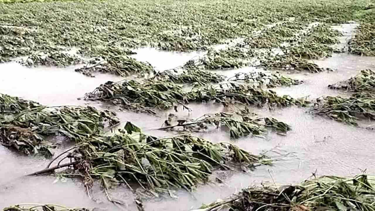 मराठवाड्यात पावसामुळं शेतीचं प्रचंड मोठं नुकसान