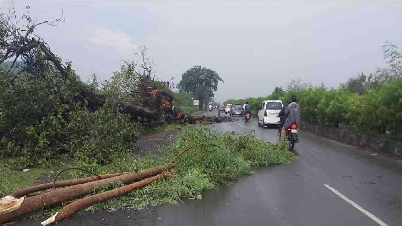 औरंगाबादमधील गोळीवाडा फाट्याजवळ भले मोठे झाड रस्त्यावर कोसळून पडले.