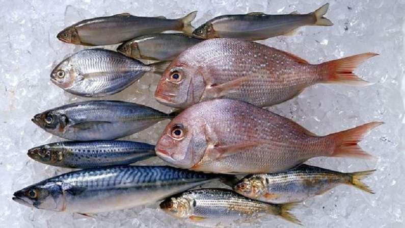 मत्स्यव्यवसायात क्रांती : 'ई-फिश मार्केट अॅप' मुळे मासे उत्पादकांना थेट फायदा