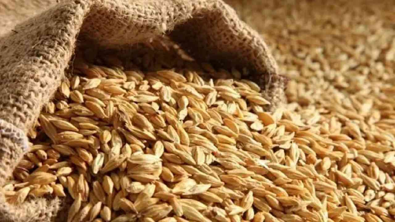 तुम्ही रोटीच्या स्वरूपात निरोगी कार्बोहायड्रेटयुक्त बार्लीचे सेवन करू शकता. तसेच तुमच्या नेहमीच्या पीठात बार्लीचे पीठ मिसळा. यामुळे तुमच्या शरीराला शक्ती मिळेल आणि भूक नियंत्रित होईल.