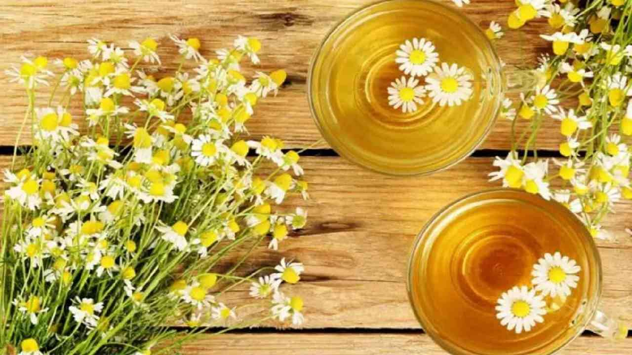 कॅमोमाइल चहा हाडांसाठी फायदेशीर आहे. एका अभ्यासानुसार, कॅमोमाइल चहामध्ये एस्ट्रोजेनिक विरोधी प्रभाव असू असतो. यामुळे हाडांची घनता वाढवण्यास मदत होते.