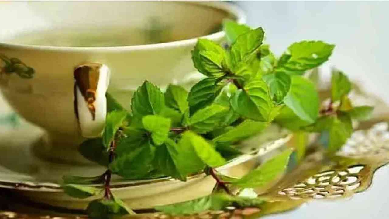 पुदिना चहा आपल्या आरोग्यासाठी अत्यंत फायदेशीर आहे. हे आपले मूड सुधारण्यासाठी कार्य करते. हा चहा तयार करण्यासाठी पुदिन्याच्या झाडाची पाने गरम पाण्यात पाच ते दहा मिनिटे ठेवा त्यानंतर हे पाणी प्या.