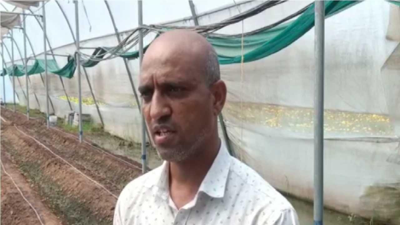 फुलांवर केलेला लाखो रुपये खर्च निघणे सुद्धा मुश्किल झाल्याने शेतकऱ्याने आपली जरबेरा फुल शेती नष्ट करुन टाकली आहे.